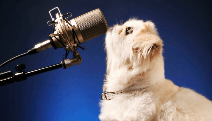 A cat standing at a microphone.